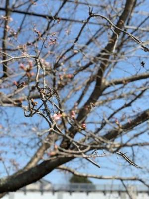 広島県広島市中区薬研堀のヘルス オアシスの写メ日記 桜??画像